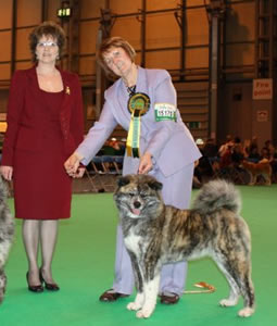 Tina judging Japanese Akitas at Crufts